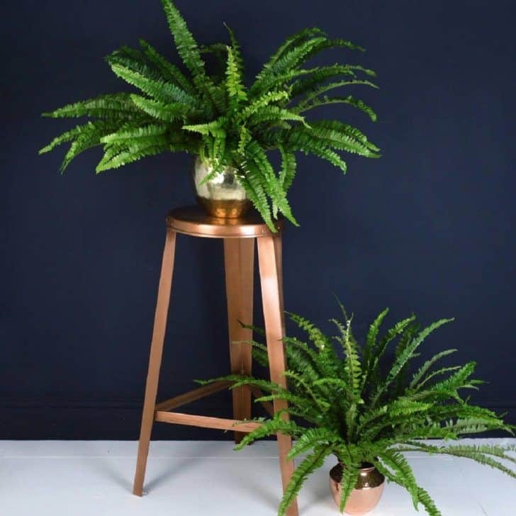 low-light-plants-sword-fern