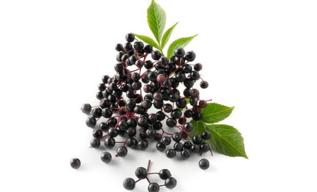 7 Elderberry Health Benefits You Don't Know About