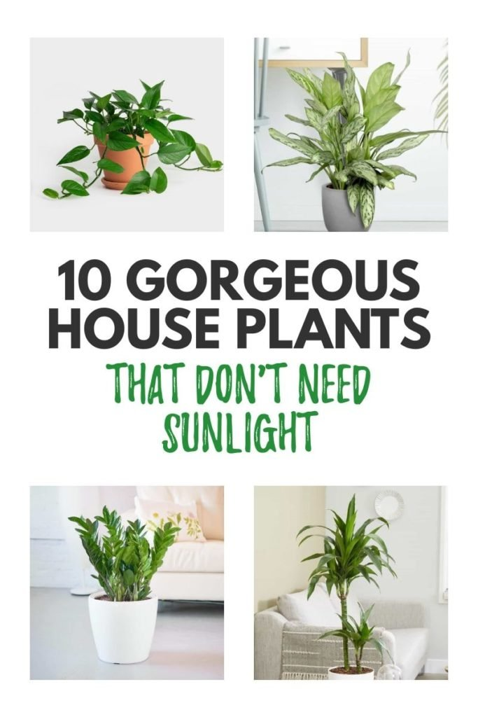 houseplants-that-don't-need-sunlight