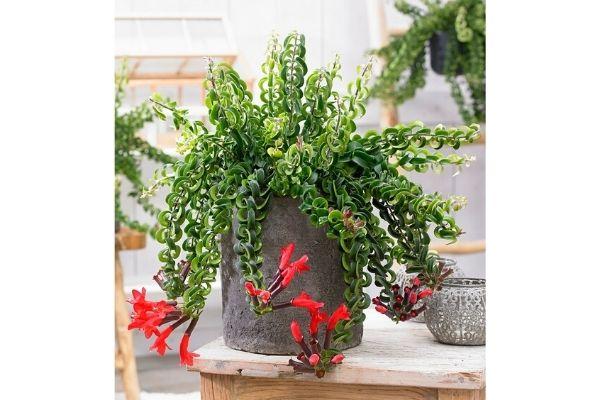 pet-friendly-indoor-house-plants