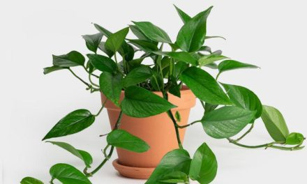 10 Of The Best Indoor Plants That Don't Need Sunlight