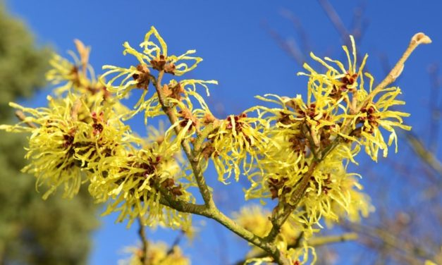 9 Witch Hazel Benefits And Uses You'll Wish You Knew Sooner