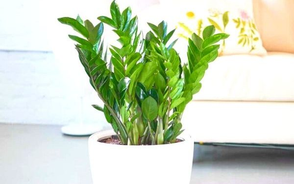 Best Hard to Kill Air Purifying Houseplants For Beginners