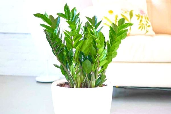 air-purifying-house-plants-for-beginners