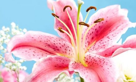 34 Stunning Pink Perennial Flowers That Will Brighten Any Garden