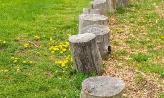 How to Remove a Tree Stump: 2 Foolproof Methods!