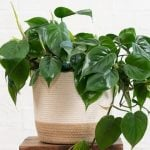16 Beautiful Low Maintenance Houseplants Anyone Can Grow