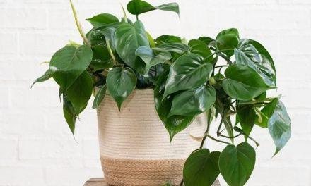 16 Beautiful Low Maintenance Houseplants Anyone Can Grow