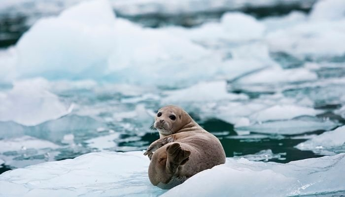 a baby seal, wildlife you might see on a glacier hike