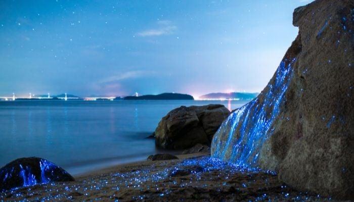 a bioluminescent bay in california