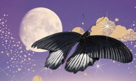 Black Butterfly Spiritual Meaning & Symbolism {2021}