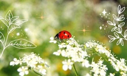 Deep Ladybug Symbolism & Spiritual Meaning [2021]